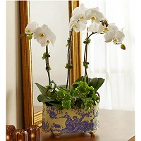 Deals on English Orchid Garden